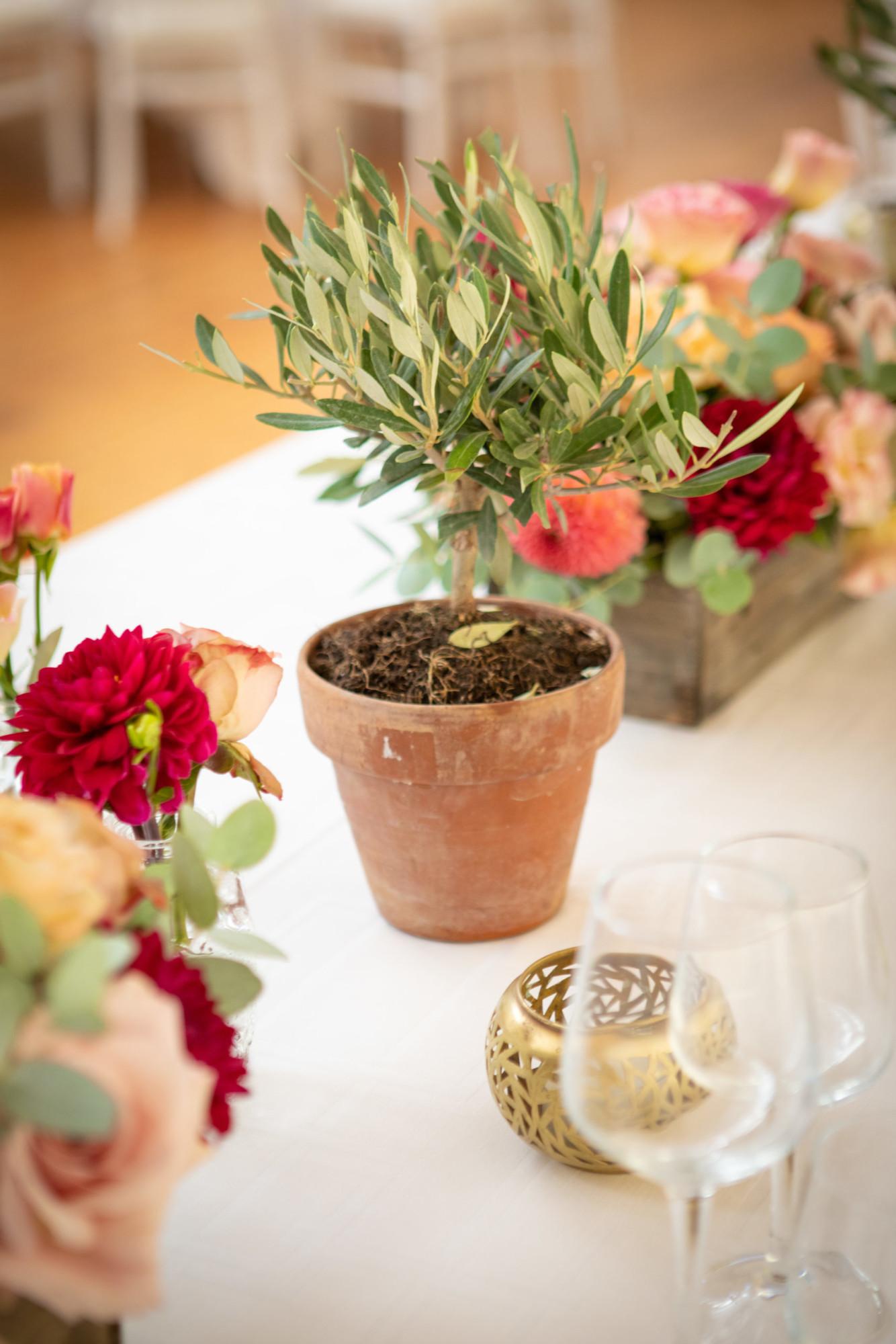 Plante mariage